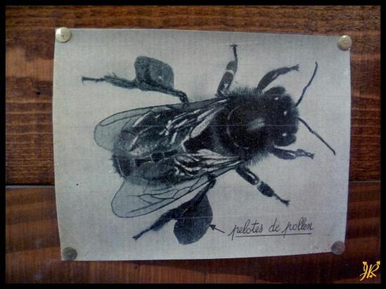 pelotes-de-pollen.jpg