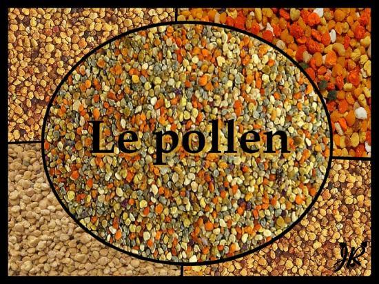 pollen-1-1.jpg