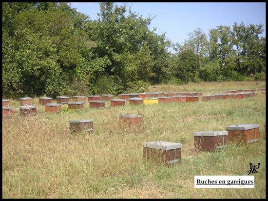 ruches-en-garrigues.jpg