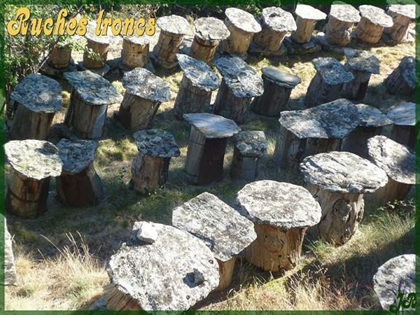 ruches-troncs-1-2.jpg