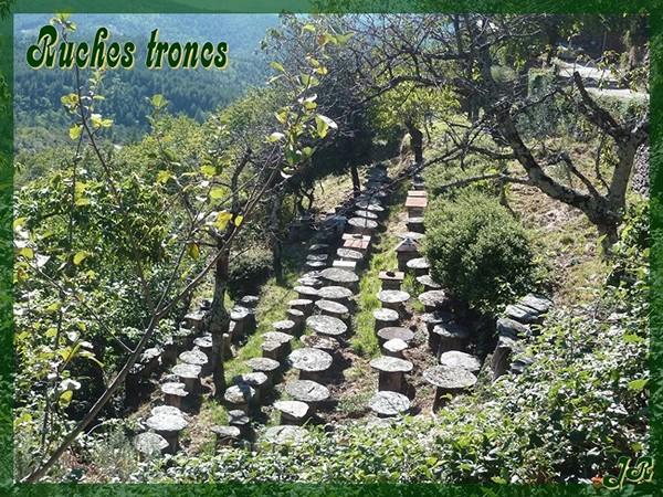 ruches-troncs-en-cevennes-1.jpg
